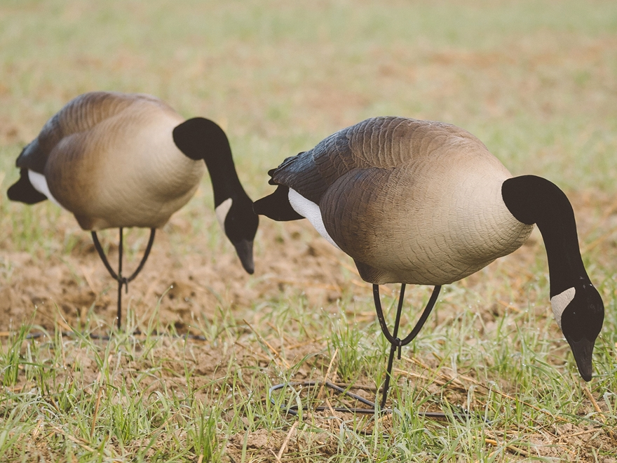 Tanglefree Pro Series Greater Goose Decoy Full Body Feeder Decoy Pack of 4