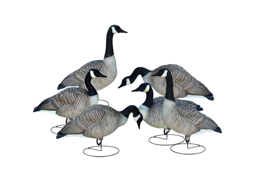 Final Approach Livecraft Mixed Full Body Canada Goose Decoy Pack of 6