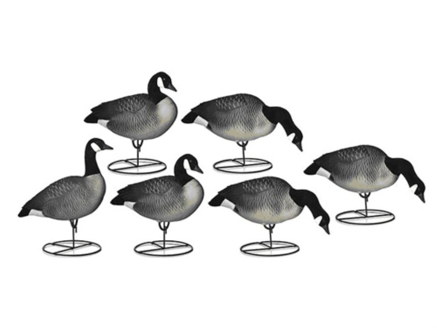 dakota full body Canada Goose' decoys