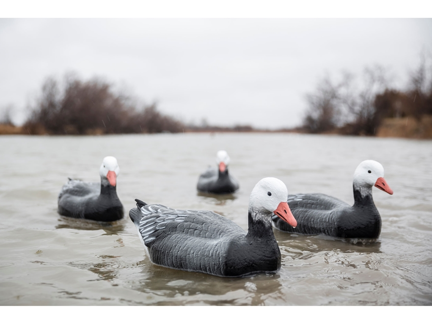Tanglefree Pro Series Blue Goose Floater Decoy Pack of 4