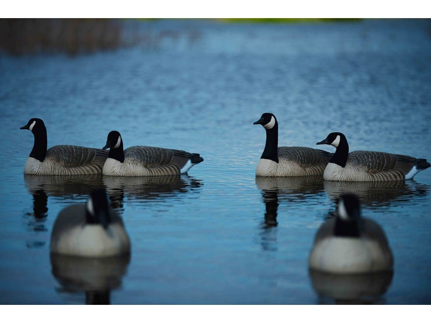 GHG Pro-Grade Honker Active Floater Canada Goose Decoy Pack of 4