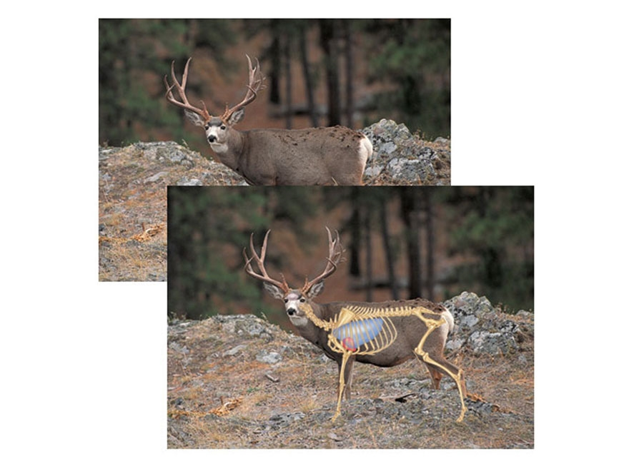 "Safari Press Perfect Shot North American Target Mule Deer 24"" x 36"" Package of 5"