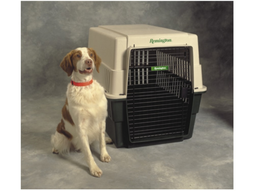 Kennel Dimensions For Dog