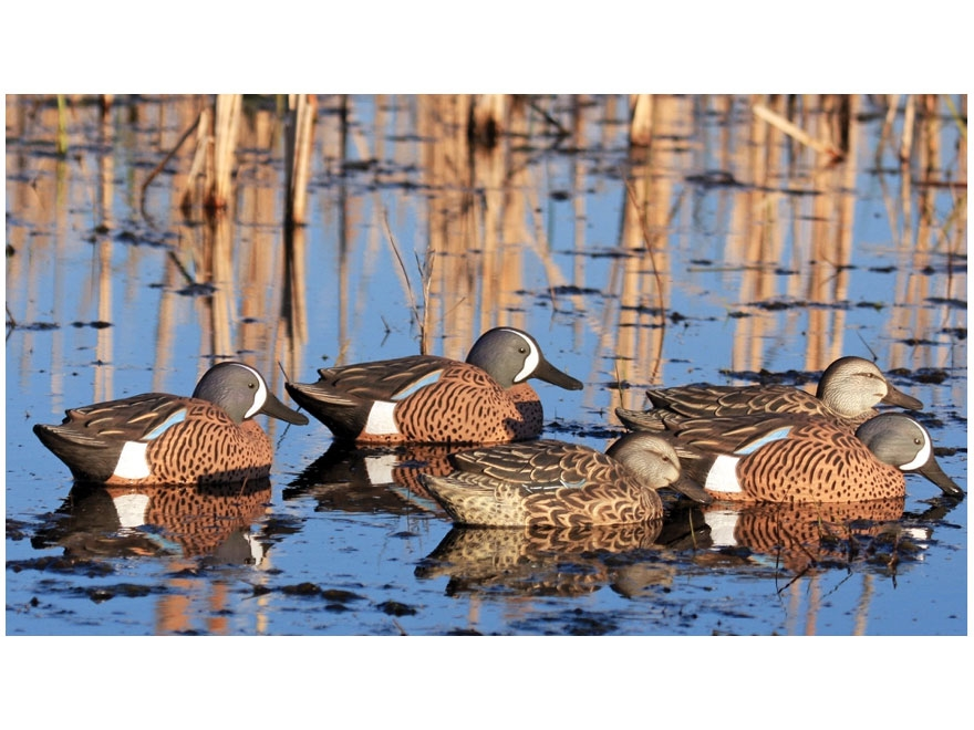 GHG Pro-Grade Pre-Texas Rigged Blue Wing Teal Duck Decoy Pack of 6