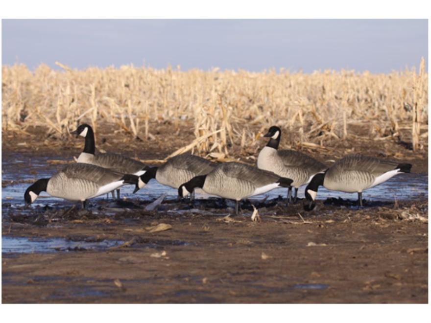 Ghg Canada Goose Decoys