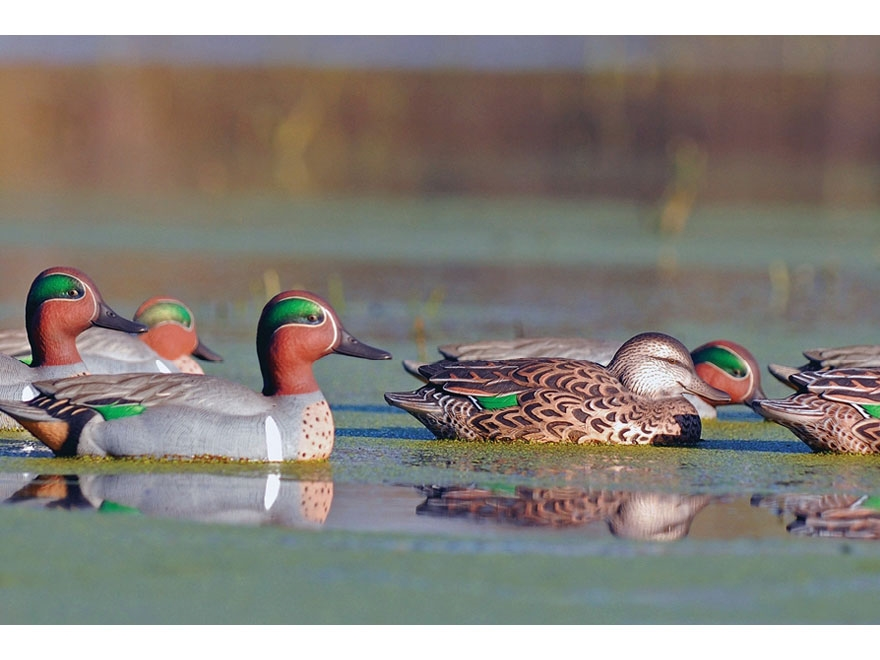 GHG Pro-Grade Pre-Texas Rigged Green Wing Teal Duck Decoy Pack of 6