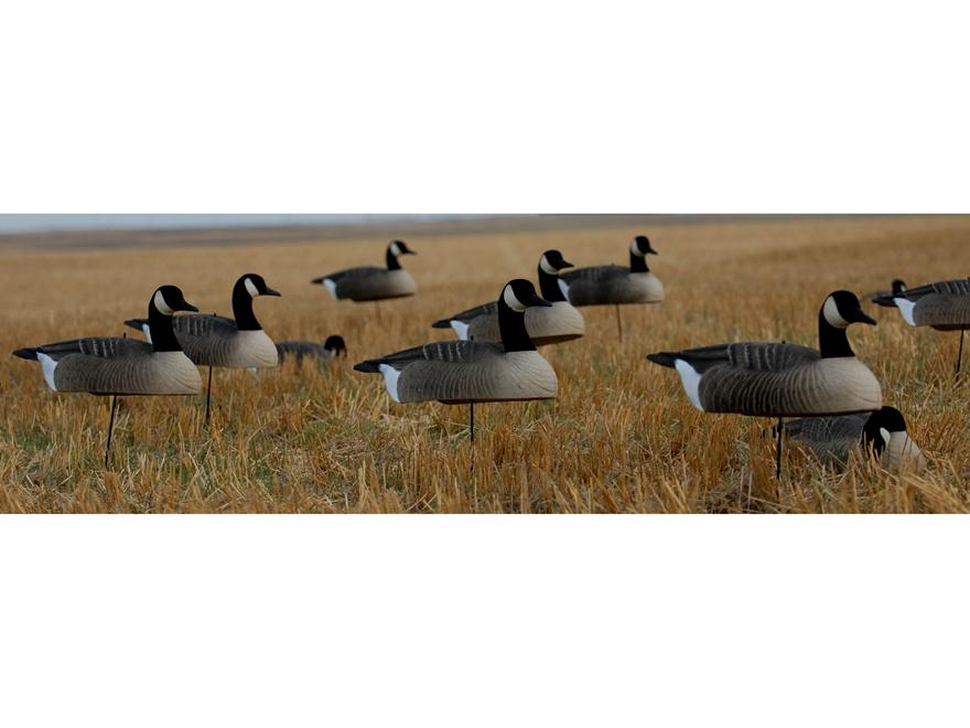 hot buy canada goose decoys