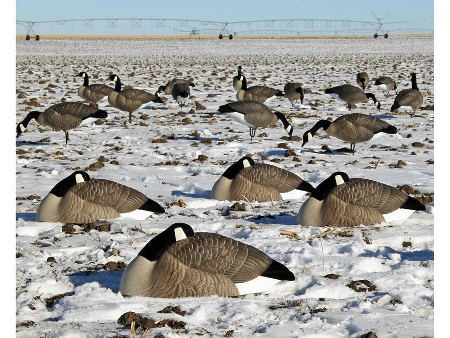 Canada Goose' shell decoys sale