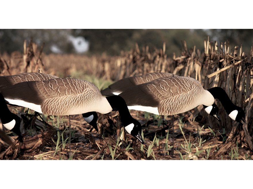 Tanglefree Pro Series Canada Goose' Sleeper Decoy Shell Pack of 6