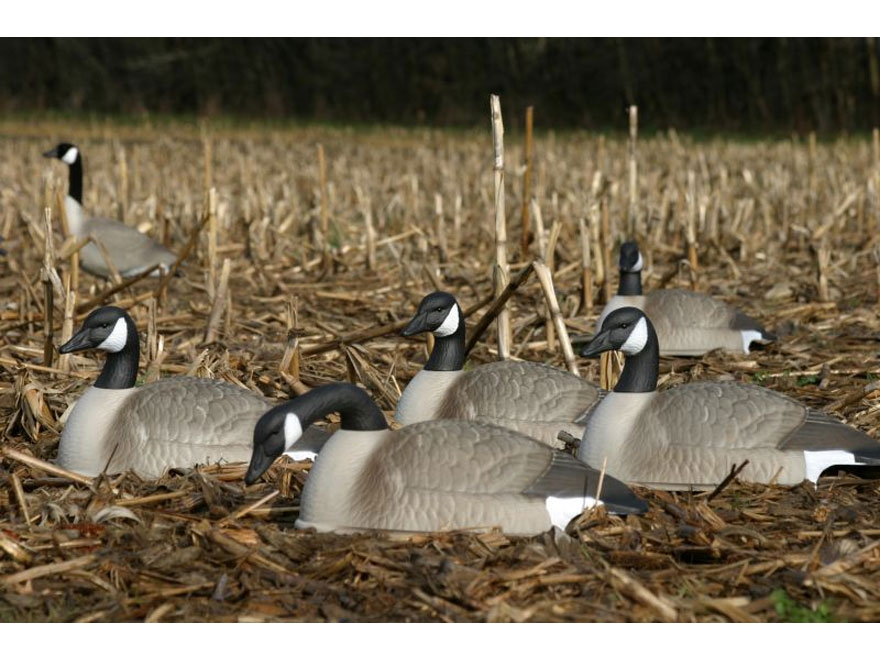 cheap canada goose decoys on sale like fire