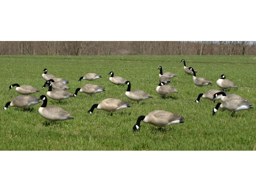 RedHead Full-Body Canada Goose' Decoys - Standard Pack