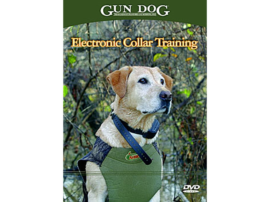 Electronic Dog Collar Training Dvd