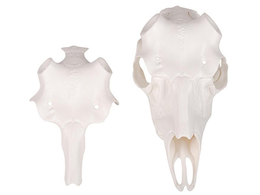 Mountain mike s universal skull master deer mounting kit